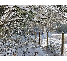 Fence Posts Photographic Print