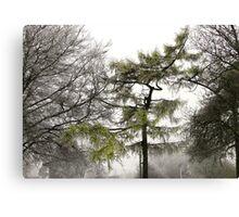 Winter103 Canvas Print