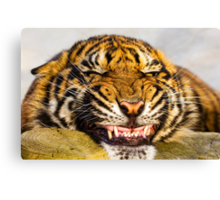 Say cheeeeeeeeeeeeeeeeeeese!!! Canvas Print