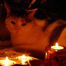 Candlelight - Zippy  by vbk70