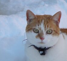 Snow Cat by Kirsty Auld