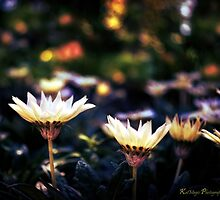 Bokeh Darkness by KatMagic Photography