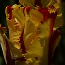 Red & Yellow Parrot Tulip by Lindie Allen