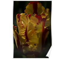 Red & Yellow Parrot Tulip Poster