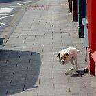 dog by JohnHDodds