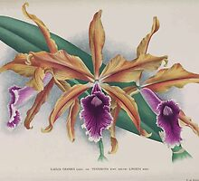 Iconagraphy of Orchids Iconographie des Orchidées Jean Jules Linden V15 1899 0202 by wetdryvac