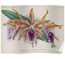 Iconagraphy of Orchids Iconographie des Orchidées Jean Jules Linden V15 1899 0202 Poster
