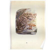 The Tale of Squirrel Nutkin Beatrix Potter 1903 0057 Brougt Him in To Skin Him Poster