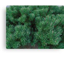 green herringbone Canvas Print