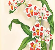 Iconagraphy of Orchids Iconographie des Orchidées Jean Jules Linden V17 1906 0126 by wetdryvac