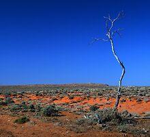 Outback - Lone tree in the desert by Joanne Emery