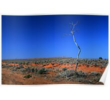 Outback - Lone tree in the desert Poster