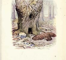 The Tale of Squirrel Nutkin Beatrix Potter 1903 0013 Old Brown Owl by wetdryvac