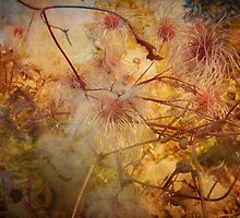 Entangled by enchantedImages