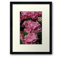 Hydrangea #3 Framed Print