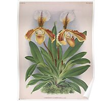 Iconagraphy of Orchids Iconographie des Orchidées Jean Jules Linden V16 1900 0218 Poster