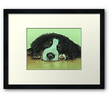 Big Puppy Paws Framed Print