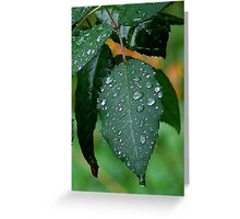 Water Dew Greeting Card