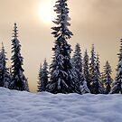 Winter Trees by Inge Johnsson