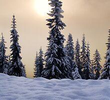Winter Trees by Inge Johnsson