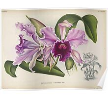 Iconagraphy of Orchids Iconographie des Orchidées Jean Jules Linden V14 1898 0156 Poster