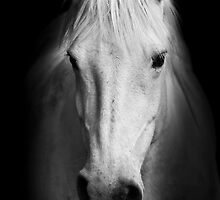 White horse - Camarge, France by Matej Kastelic