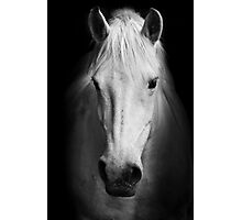 White horse - Camarge, France Photographic Print