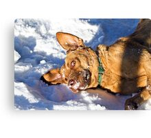 Too much fun in the snow Canvas Print