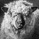Wool Face by George Wheelhouse
