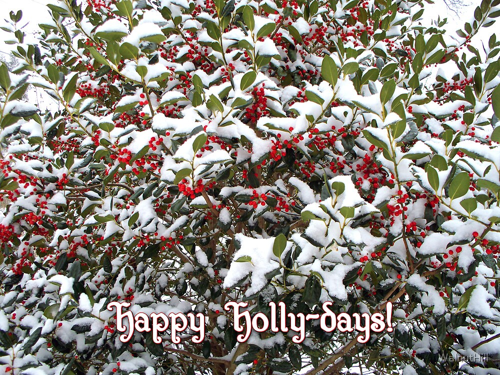Happy Holly-days! by WalnutHill