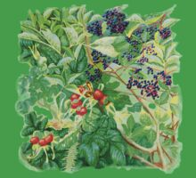 ELDERBERRIES and ROSE HIPS Kids Clothes