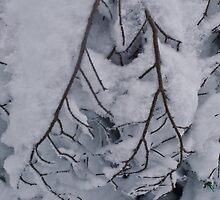 Snowy Branch on Hollyburn Mountain by Michael Garson