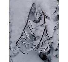 Snowy Branch on Hollyburn Mountain Photographic Print