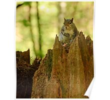 Squirrel on his Thrown Poster