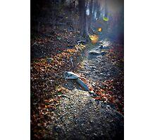 Trails Photographic Print