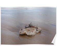 Beach Still Life 4 Poster