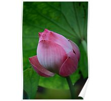 The Lotus Bud Poster