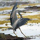 Dancing bird  by Doug Cliff