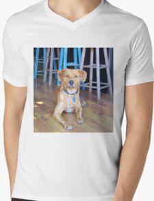 Dog In A Bar Mens V-Neck T-Shirt