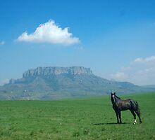 Mount Nelson with horse by bushwakka