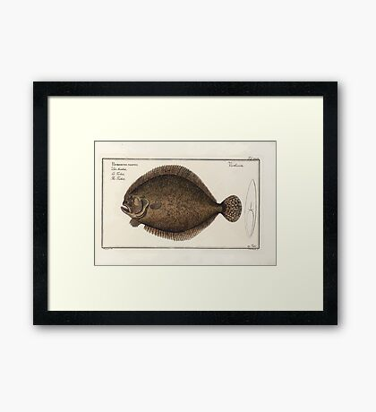 General natural history of fish  Germany Allgemeine naturgeschichte der fische Marcus Elieser Bloch Plates 1795 0335 Framed Print