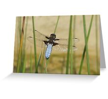 CHASER DRAGONFLY Greeting Card