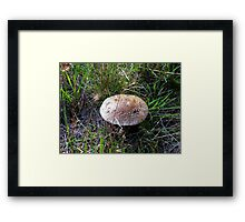 Big mushroom Framed Print