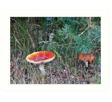 Red mushroom Art Print