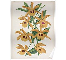 Iconagraphy of Orchids Iconographie des Orchidées Jean Jules Linden V16 1900 0054 Poster