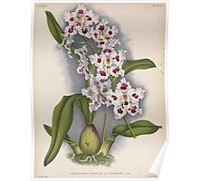 Iconagraphy of Orchids Iconographie des Orchidées Jean Jules Linden V14 1898 0172 Poster