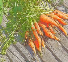 Garden Carrots by Kenneth Hoffman