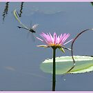 Dragonfly Delight by Louise Linossi Telfer