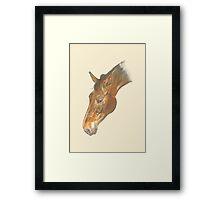 Beautiful graceful horse head image Framed Print