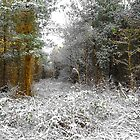 Winter Forest by Svetlana Sewell
